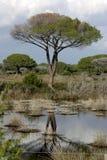 Reflexão da árvore imagem de stock royalty free