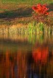Reflexão da árvore fotografia de stock