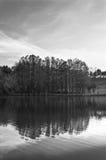 Reflexão da árvore Fotos de Stock Royalty Free