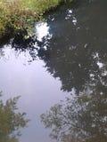 Reflexão da árvore Foto de Stock Royalty Free