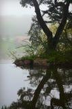 Reflexão da árvore imagens de stock