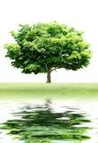 Reflexão da árvore foto de stock