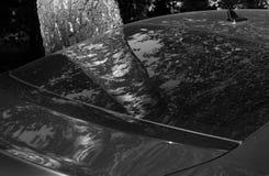 Reflexão da árvore de vidoeiro no vidro da parte traseira do carro em preto e branco Imagens de Stock
