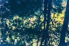 Reflexão da árvore no rio Imagem de Stock