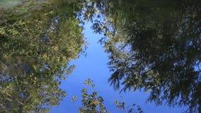 A reflexão da árvore sae no fundo da água video estoque