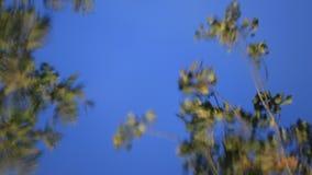 A reflexão da árvore sae no fundo da água filme