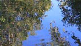 A reflexão da árvore sae no fundo da água vídeos de arquivo