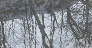 Reflexão da árvore seca na água na mola adiantada video estoque
