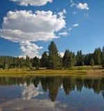 Reflexão da floresta Fotografia de Stock