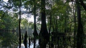Reflexão da floresta do cipreste em águas claros de turquesa da lagoa de Ginnie Springs, Florida EUA imagem de stock