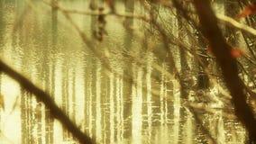 A reflexão da floresta e dos ramos em pantanais dos pântanos molha, ondinha efervescente, neve filme