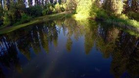 Reflexão da floresta em uma lagoa da montanha em Idaho video estoque