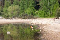 Reflexão da floresta na água Fotos de Stock Royalty Free
