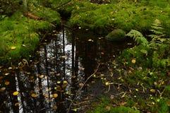 Reflexão da floresta no córrego da floresta tropical do outono da água Fotografia de Stock Royalty Free