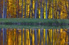 Reflexão da folha do outono no lago Imagem de Stock