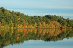 Reflexão da folha em uma lagoa quieta Imagens de Stock