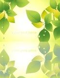 Reflexão da folha no fundo amarelo Foto de Stock