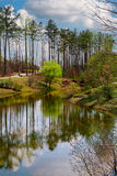 Reflexão da mola adiantada Foto de Stock Royalty Free