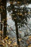 A reflexão da natureza no outono imagem de stock royalty free
