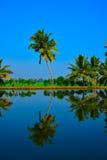 Reflexão da palma de coco Imagens de Stock Royalty Free
