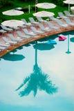Reflexão da palmeira Fotos de Stock