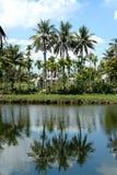 Reflexão da palmeira Foto de Stock