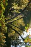 Reflexão da queda na água. Foto de Stock Royalty Free