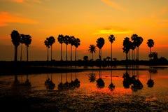Reflexão da sombra da palmeira Fotografia de Stock Royalty Free