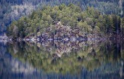 Reflexão das árvores Imagens de Stock