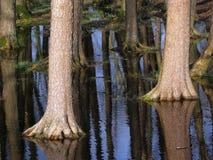 Reflexão das árvores Fotografia de Stock Royalty Free