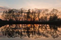 Reflexão das árvores Fotografia de Stock