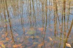 reflexão das árvores Imagem de Stock Royalty Free