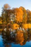 Reflexão das árvores da queda na água Imagem de Stock
