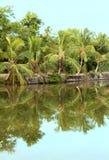 reflexão das árvores de coco Foto de Stock