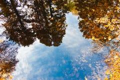 Reflexão das árvores do outono Foto de Stock