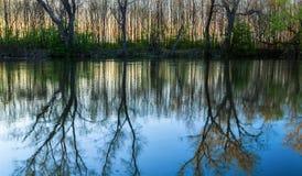 Reflexão das árvores e do por do sol no rio Maly Dunaj, Eslováquia Imagem de Stock