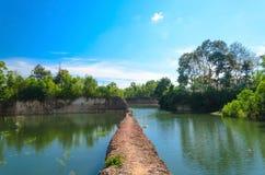 Reflexão das árvores na água Fotografia de Stock Royalty Free