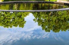 Reflexão das árvores na água Imagens de Stock