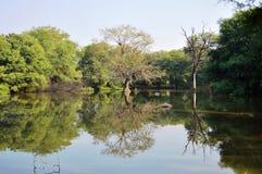 A reflexão das árvores na água Fotos de Stock Royalty Free