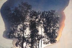 Reflexão das árvores na poça Foto de Stock Royalty Free