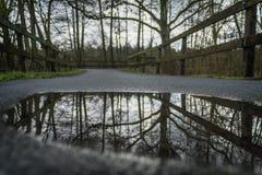 Reflexão das árvores na poça Fotografia de Stock Royalty Free