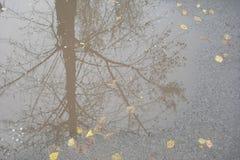 Reflexão das árvores na poça do outono fotos de stock royalty free