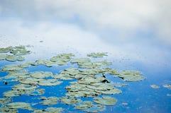 Reflexão das almofadas e do céu de lírio Fotos de Stock