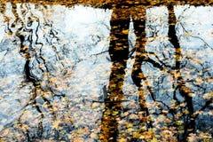 Reflexão das folhas caídas na água fotos de stock royalty free