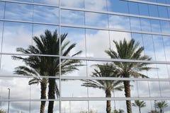Reflexão das palmeiras Fotografia de Stock