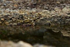 Reflexão das rochas na água Fotografia de Stock Royalty Free