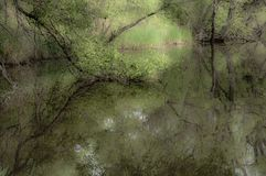 Reflexão de árvores da mola na água/lago/natureza do leste distante de Rússia Fotografia de Stock Royalty Free