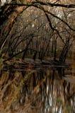 Reflexão de árvores desencapadas do inverno no rio de Sangamon fotos de stock