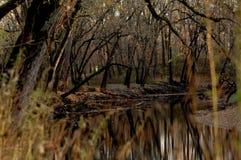 Reflexão de árvores desencapadas do inverno no rio de Sangamon fotografia de stock