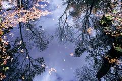 Reflexão de árvores do outono fotografia de stock royalty free